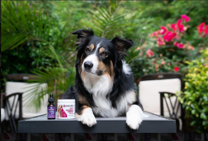 Why We Celebrate CBD for Pets